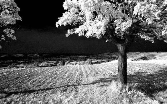 Immagine all'infrarosso